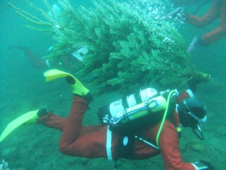 Santa Dive for Myton Hospice